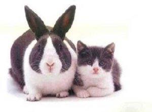 identity-theft-bunny-kitten